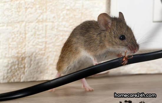 Chuột cắn dây điện cũng không được bảo hành