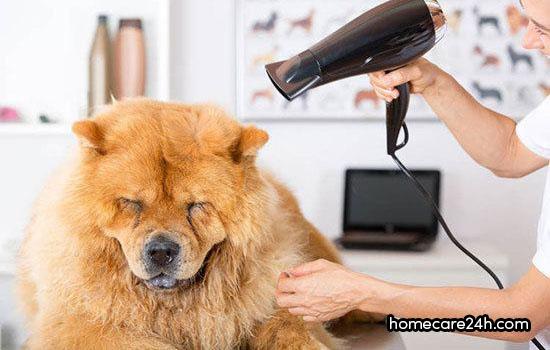 Công dụng của máy sấy tóc