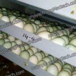 Máy ấp trứng vịt lộn, chọn loại nào, cần lưu ý những gì
